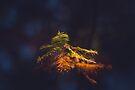 Fall Foliage by Briana McNair
