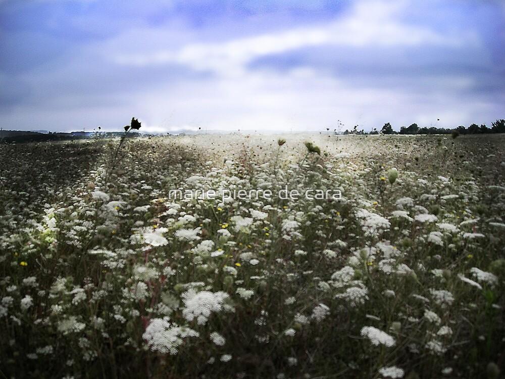 fleur des champs2 by marie pierre de cara