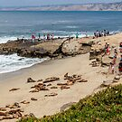 a group of Sea Lions basking in the sun on the rocks at La Jolla Cove, La Jolla, San Diego, California, USA by PhotoStock-Isra