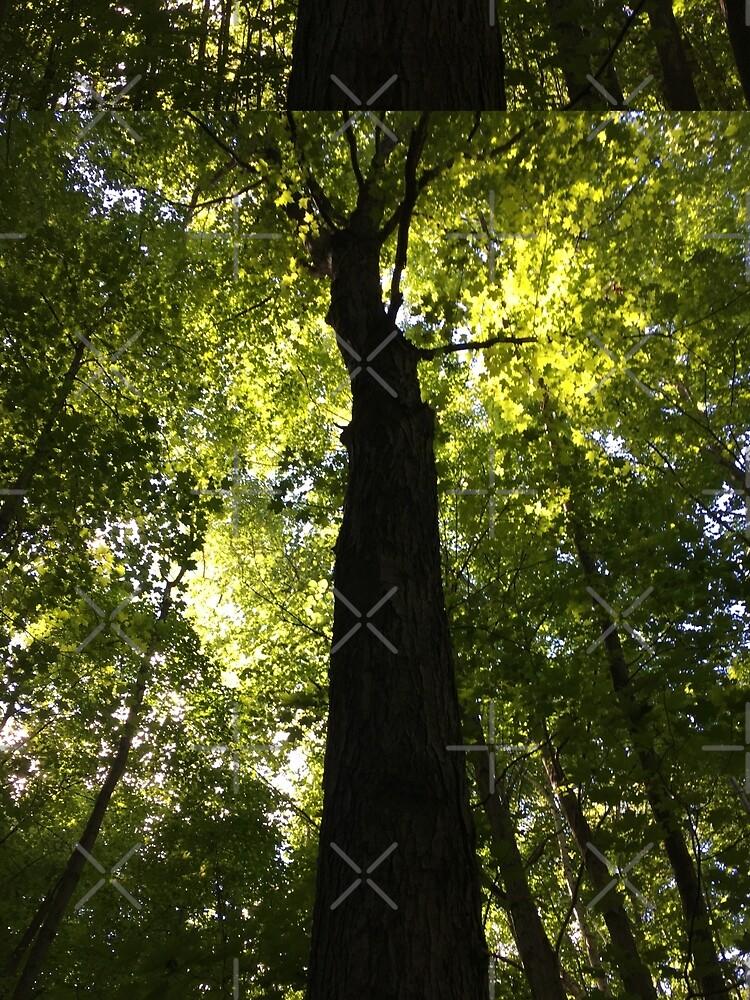 Tree by PicsByMi