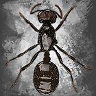 Insecta v5 by socozora