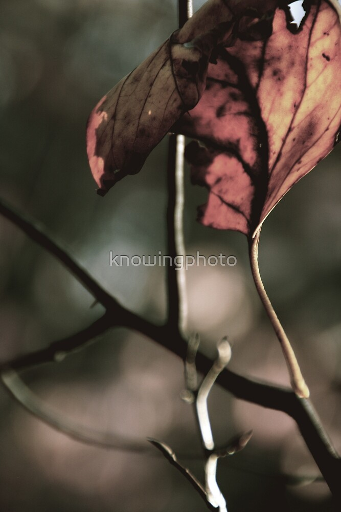 Study of a Leaf - November by knowingphoto