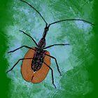 Insecta v7 by socozora
