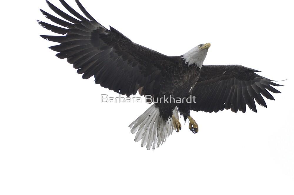 Feathers for Flight - American Bald Eagle by Barbara Burkhardt