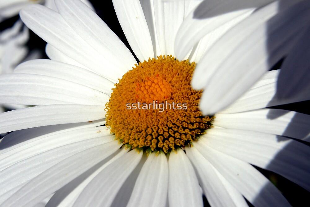 Daisy in the Sun by sstarlightss