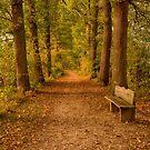Bench by Nicole W.