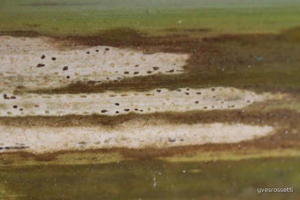 aging tracks by yvesrossetti