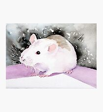 Star, the fancy rat. Photographic Print