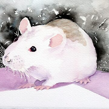 Star, the fancy rat. by PatEll