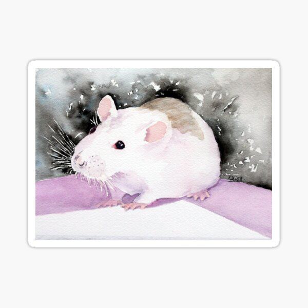 Star, the fancy rat. Sticker