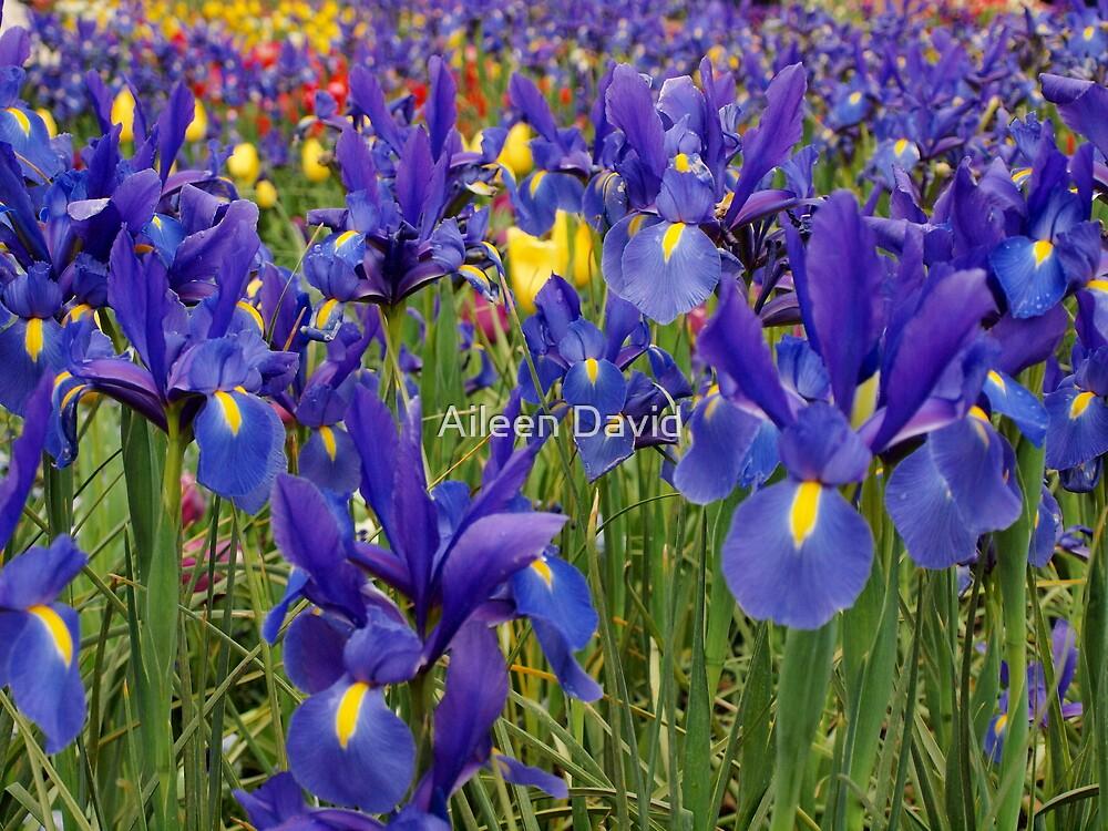 Blue by Aileen David