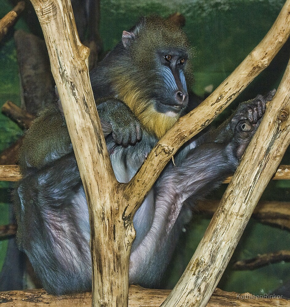 ape by KathleenRinker