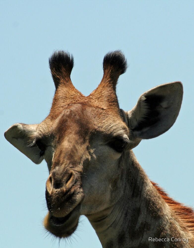 Giraffe by Rebecca Conroy