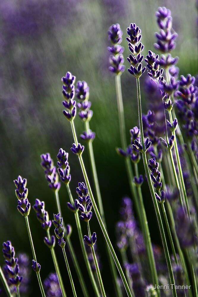 Purple Haze by Jenni Tanner