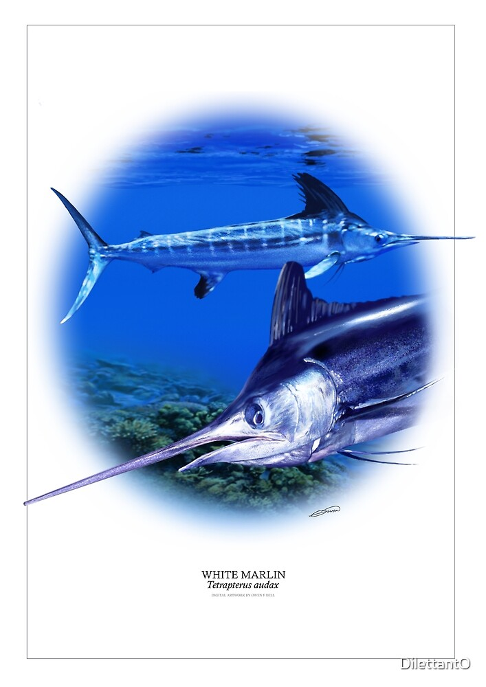 WHITE MARLIN POSTER 1 by DilettantO