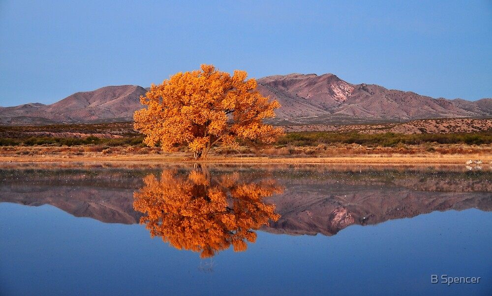 Bosque Del Apache by B Spencer