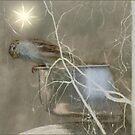 Wintertime in December by Bonnie Comella