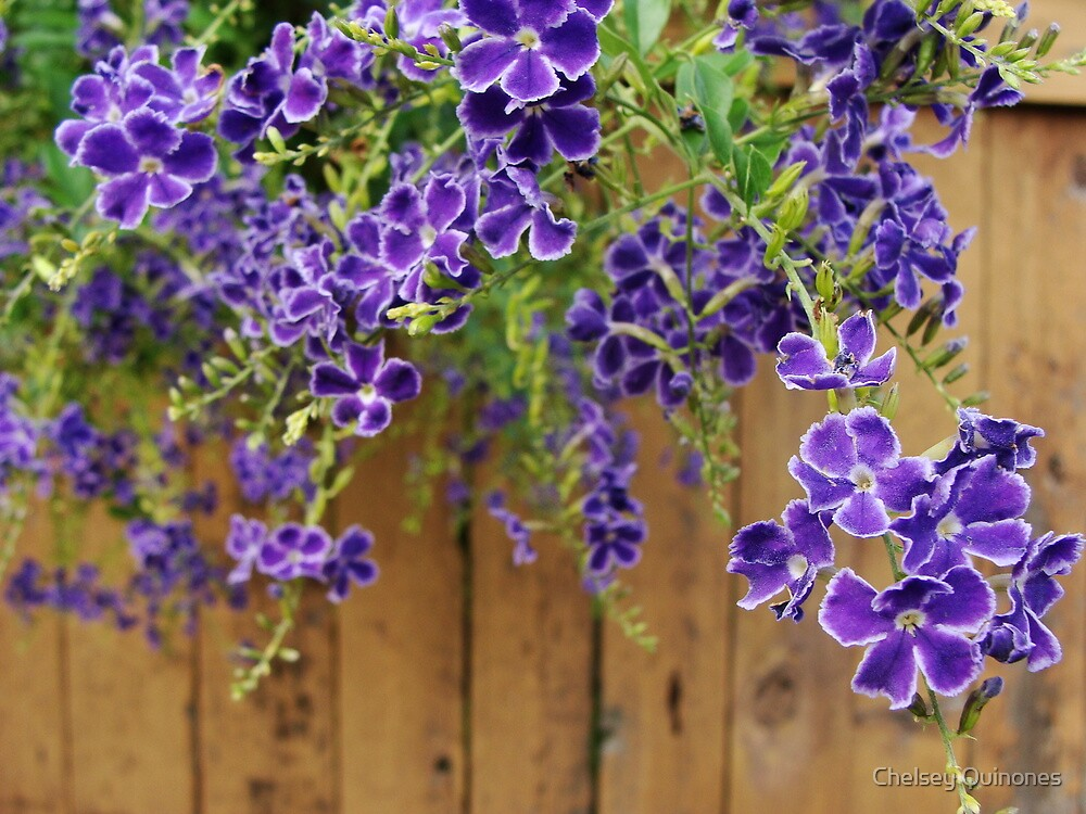 purple by Chelsey Quinones