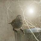 Wintertime in February by Bonnie Comella