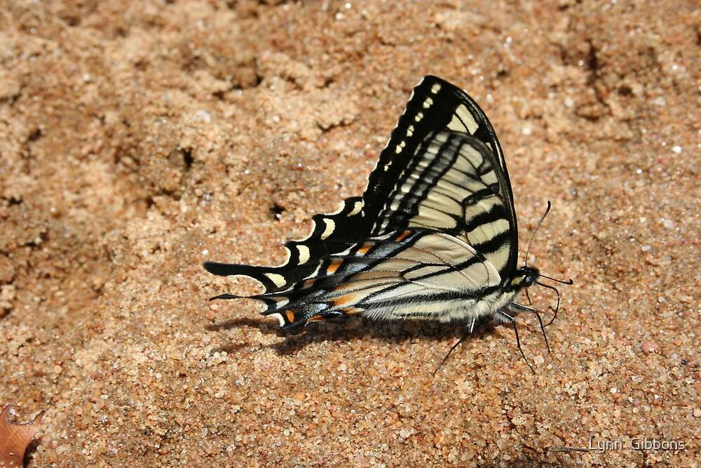 Butterfly by Lynn  Gibbons