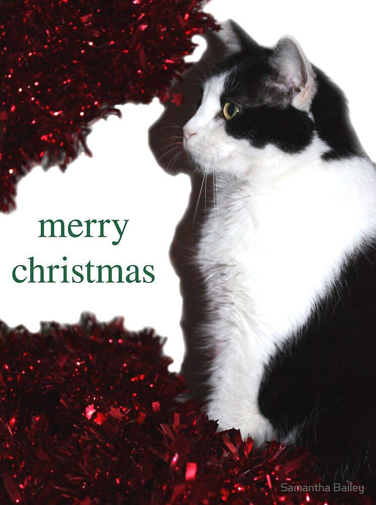 Christmas Cat by Samantha Bailey