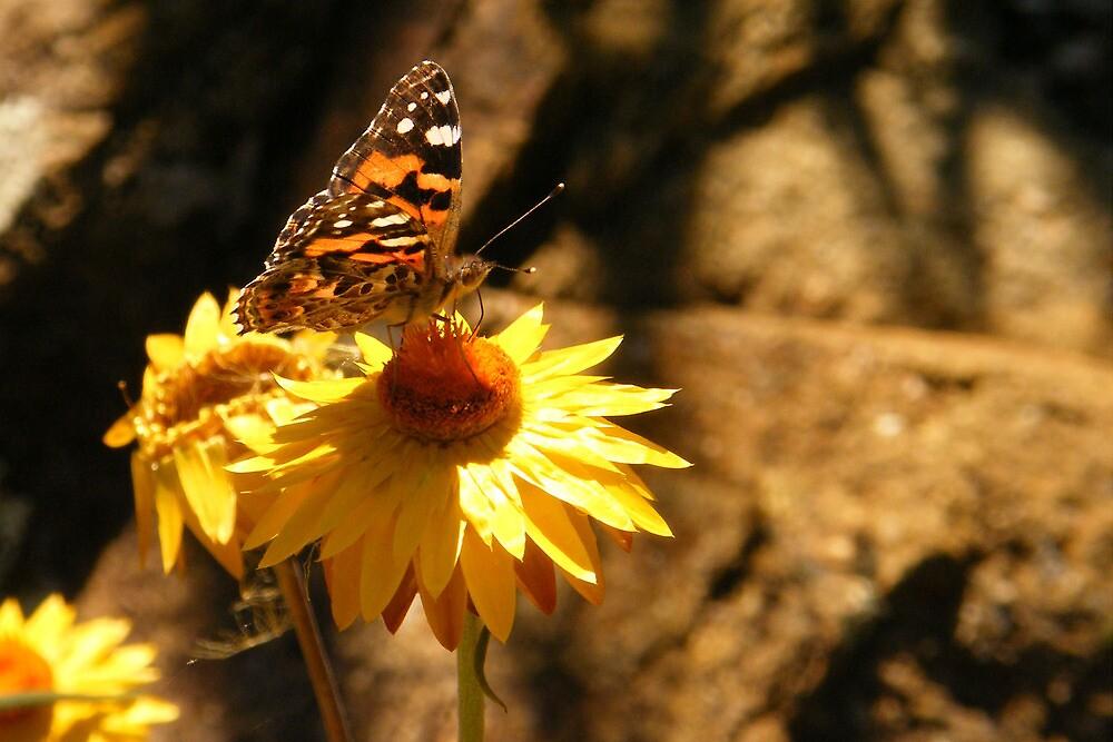 butterfly on a flower by Joel Wigley