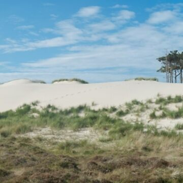 Schoorlse Duinen Noord Holland The Netherlands  Panorama view across the dune landscape. by stuwdamdorp