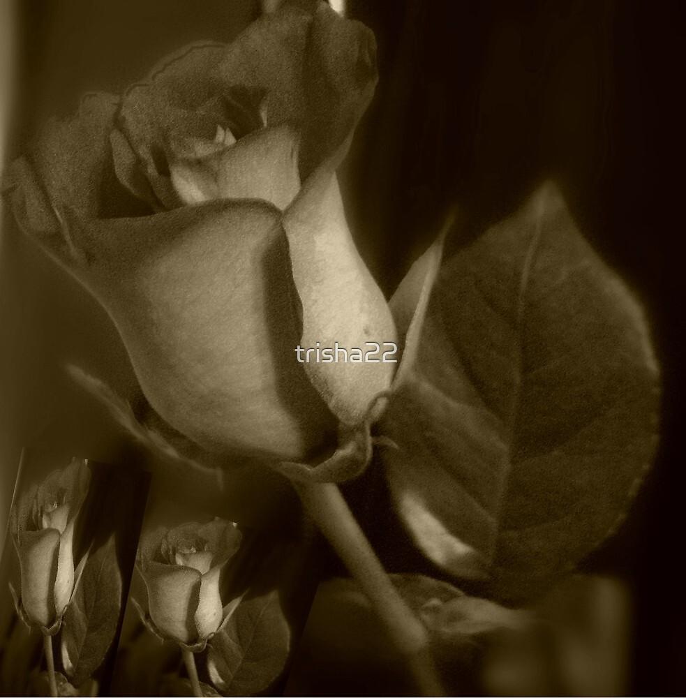 ROSE by trisha22
