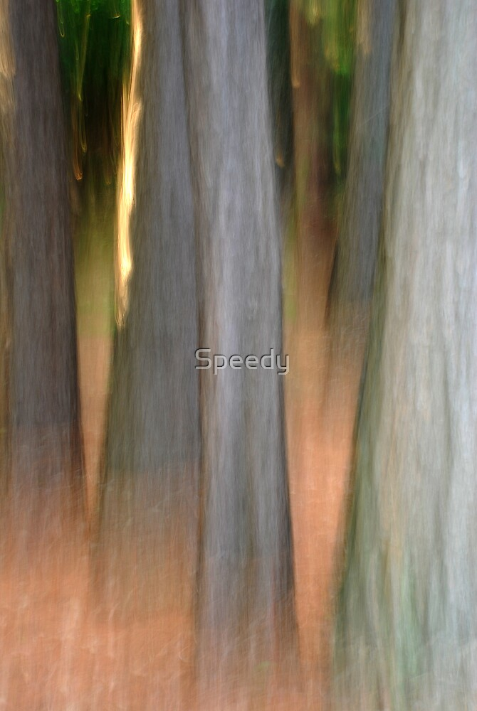 Blurred forest of trees by Speedy