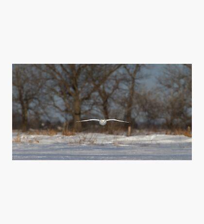 Glider - Snowy Owl Photographic Print