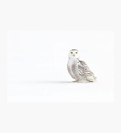 Cast a shadow - Snowy Owl Photographic Print