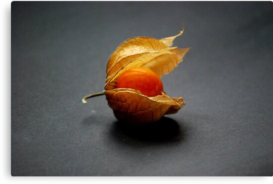 Physalis by Rowan  Lewgalon
