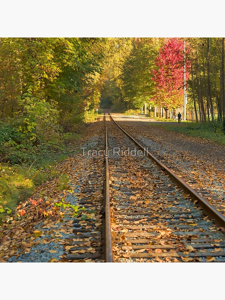 Autumn Tracks by taos
