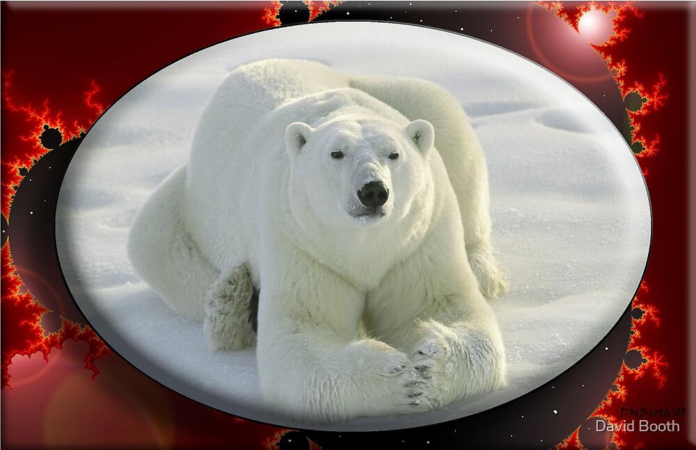 Alpha Bear by David Booth