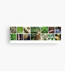 Tropical Images Canvas Print