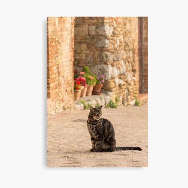 Content Kitty Canvas Print