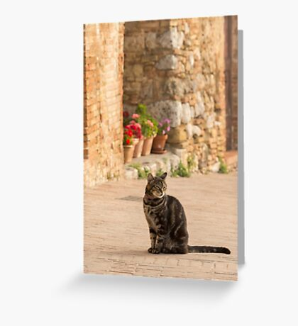 Content Kitty Greeting Card