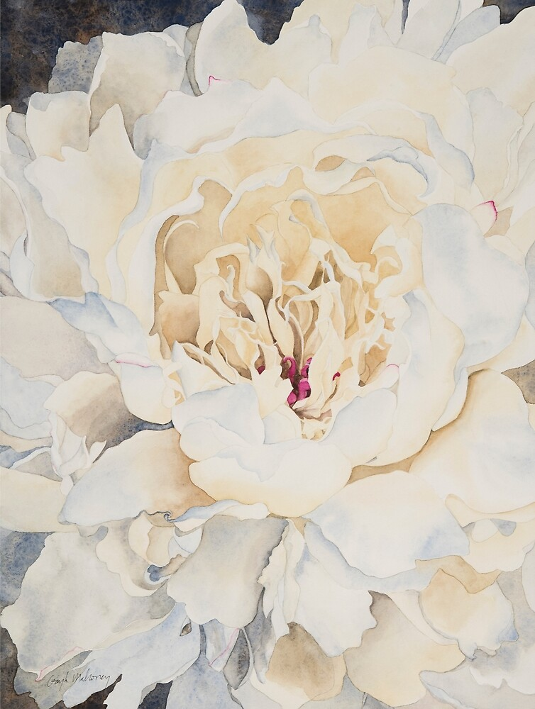 Peony in Cream Watercolor by Gayle Mahoney