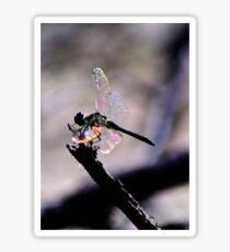 Dragonfly Wings Sticker