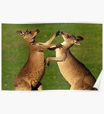 Kangaroo Fight Club Poster