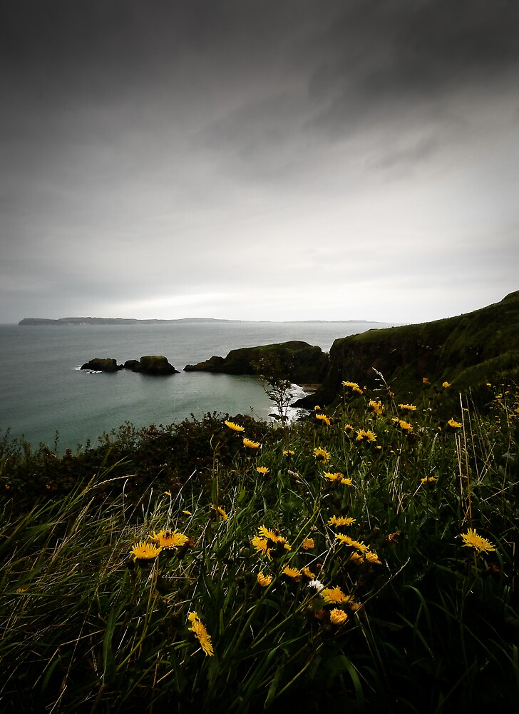 Flowers on the Antrim Coast, Northern Ireland by dendritic