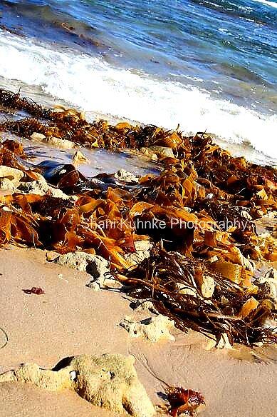 Diamond Bay Back Beach. by Shani Kuhnke