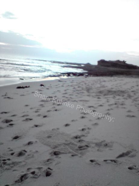 Dimmicks Back Beach by Shani Kuhnke