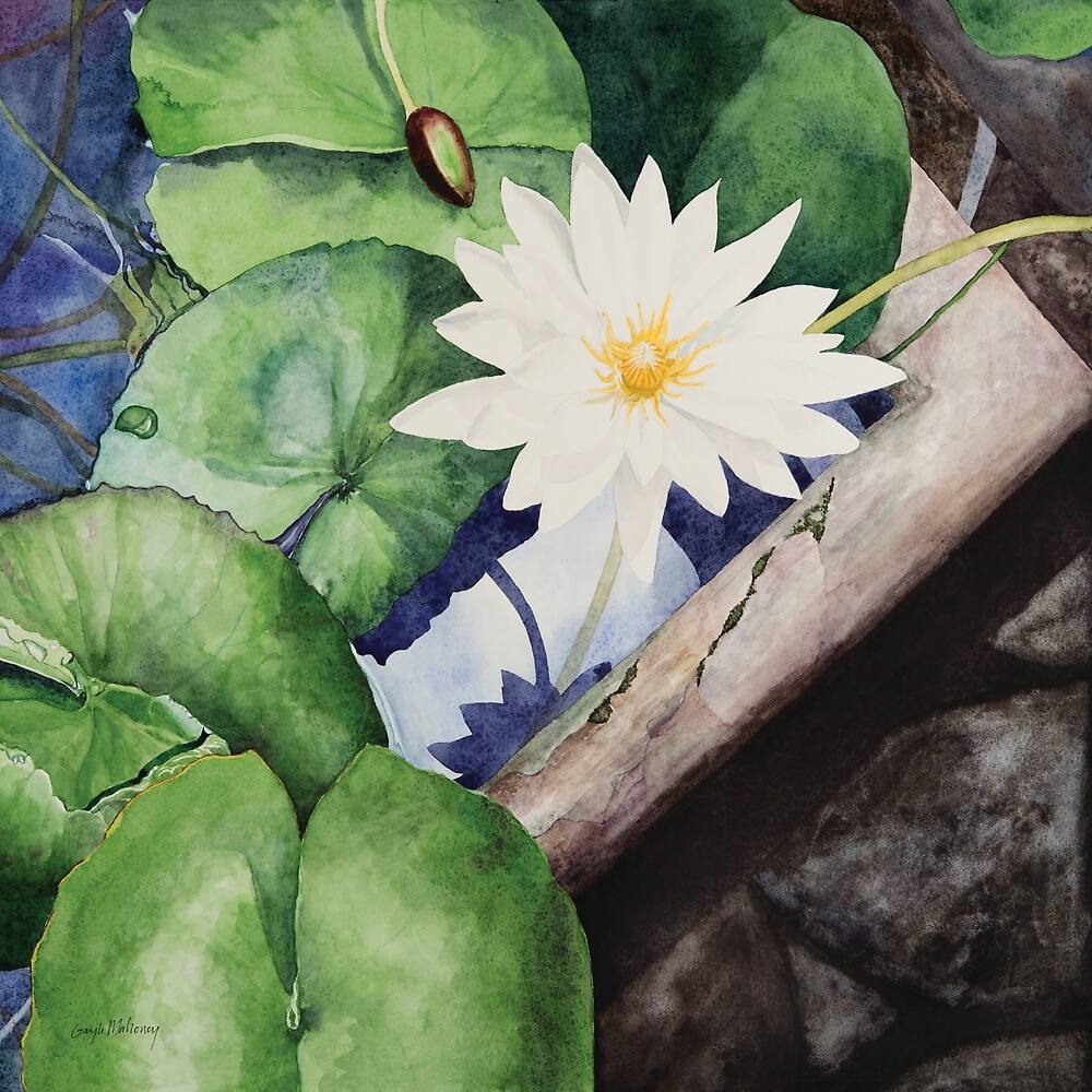 Greenhouse Water Lily Watercolor by Gayle Mahoney