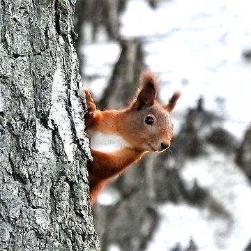 Squirrel in a birch tree by frugnusdesign