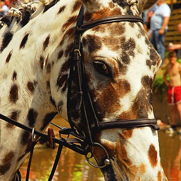 Spotted Pony by Billlee