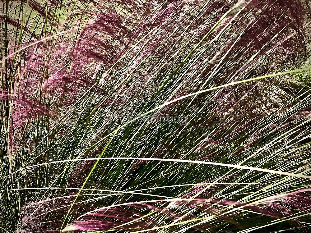 Purple Grasses Majesty by justminting