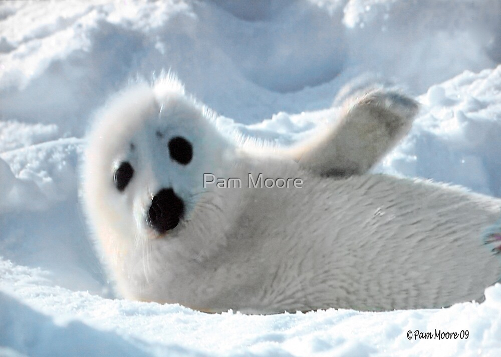 a Cute Seal Pup by Pam Moore