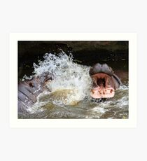 Hungry hippos?? Art Print