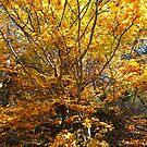 Bieszczady Mountains . Poloniae Alpe Besczade. Бещади . October 2018. ©Dr.Andrzej Goszcz Photography. by © Andrzej Goszcz,M.D. Ph.D